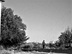 Mother -- through the windowpane (Milan Korenev) Tags: person countryside landscape tree rural distance sky mono monochrome bnw bw woman window glass field