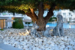 Dog family (donnicky) Tags: greece kos artificialillumination blurredbackground closeup dof dog evening hotel nopeople outdoor publicsec sculpture stone summer swimmingpool travel tree vacation water