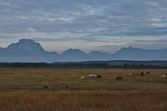 early morning drives (Glenna Barlow) Tags: grandtetonnationalpark tetons mountains wyoming landscape nature horses