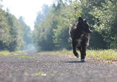 Holidays (Living life off leash) Tags: dog pet prescottrussell trail summer haze