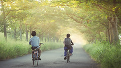 苦楝樹隧道|Sunrise (里卡豆) Tags: olympus epl8 75mm f18 神之光 chiayi 嘉義 taiwan 台灣 olympus75mmf18 日出 sunrise sunlight light