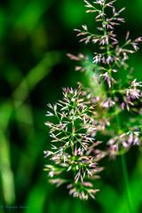 Flower (Benjamin Schwitz) Tags: flowers makro macro canon eos 6d switzerland swiss suisse outdoor hiking wandern natur nature ef 100mm f28l is usm lightroom explore