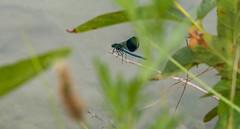 Lac Bleu - Libellule (Maverick67350) Tags: nikon d7100 lacbleu drôme lake france paysage vercors tamron 18200