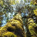 20170716_115316 Incredible forest in Ixtlan de Juarez thumbnail