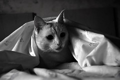 Qué hora é? (carlosdeteis.foto) Tags: carlosdeteis jatos gatos cats