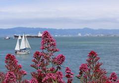 (Martin_Francis) Tags: alcatraz prison jail sanfrancisco california penal bay sailboat