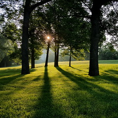 shadows (thomas.erskine) Tags: 20170718063925teecroplev 2017 jul summer dawn ottawa brittania park sun shadows trees green
