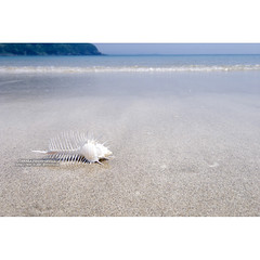 砂浜のホネガイ (Fotarts) Tags: beach coast sea seaside snail spiral conch ocean sand sandybeach stockphoto ストックフォト