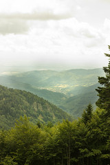 Altitude (Alexandra Kfr) Tags: nature forest vosges outside trees mountain hills landscape height view panorama geen nikkor nikon d3100 50mm paysage verdoyant hiking contrasts forêt