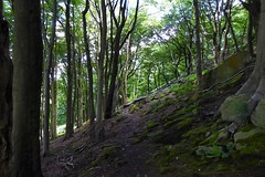 Middle Dean Wood. (biro2000) Tags: woods trees path