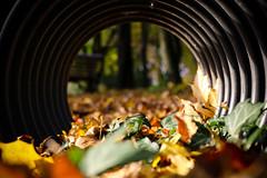 Autumn leaves (korosizoli) Tags: canon 70d autumn leaves depthoffield dof outdoor bokeh leaf tree green yellow brown