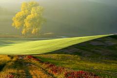 Il buongiorno....... (Zz manipulation) Tags: art ambrosioni zzmanipulation campagna toscana luce mattino verde landscape italia italy
