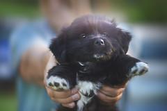 Puppylicious (petrapetruta) Tags: dog puppy cute colorplan
