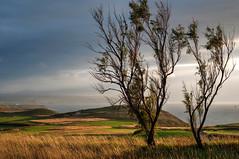Verano nublado (ccc.39) Tags: asturias gozón podes costa árboles paisaje atardecer ocaso campos naturaleza mar cantábrico nubes nublado seascape trees sunset
