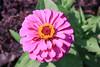 Summer glory (Paul Plummer) Tags: longfellow gardens minnehaha park minneapolis minnesota