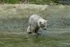 Badetag (Sockenhummel) Tags: münchen eisbär polarbear bär zoo tierpark hellabrunn fuji x30 fujifilm finepix fujix30