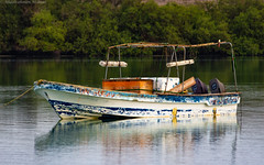 Anchored Boat among Mangroves