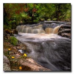 River Avon Flowers (jeremy willcocks) Tags: riveravon dartmoor devon uk southwest colour squareformat river flower water trees landscape jeremywillcocks wwwsouthwestscenesmeuk fujixpro2 xf1024mm