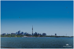 AUGUST 2016 KM1KM1_1284_45234-222. (Nick and Karen Munroe) Tags: toronto d7000 d7000nikon nikond7000 sky skyline cityoftoronto cityscape nikon nickmunroe nickandkarenmunroe nickandkaren nikon50f14g munroedesignsphotography munroedesigns munroephotography munroe karenick23 karenick karenandnickmunroe karenmunroe karenandnick landscape lake lakeshore lakefront lakeontario lakeshoreblvd lakeside water waterfront waterscape architecture cntower cn birds seagulls seagull ontario outdoors ontariocanada canada colour color beauty beautiful brilliant blue