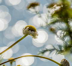 Round Bokeh. (Omygodtom) Tags: abstract art contrast exotic explorer existinglight flower flickr exposure outside nikkor natural nature nikon dof d7100 plant sparkle river nikon70300mmvrlens