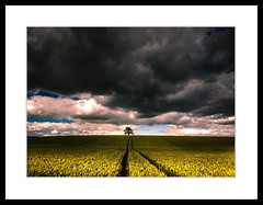Dark Times Ahead (RonnieLMills) Tags: dark clouds unsettled weather rain storms farming agriculture cereal crops wheat track lines light shadow ballystockart road gransha moneyreagh