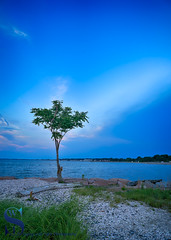 Lone tree over looking the water (Singing With Light) Tags: 17th 2017 alpha6500 ct milford mirrorless nycny silversandsstatepark silversands singingwithlight sunsetjune a6500 boardwalk july photography singingwithlightphotography walnutbeach