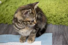Jennifer (ambeizzi) Tags: cat pussy feline pet love furry eyes cute aww
