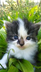 hey i'm ernie... (Emilynx) Tags: cats animals animal amateur kittens kitty green grass photography plant flickr nature natura natur natural black brown