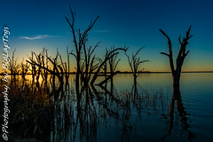 IMG_5386 (biglaptogs) Tags: barmera lakebonney riverland sa states