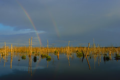 somwhere over the rainbow ... (Sandra Bartocha) Tags: csandrabartocha rainbow lake mv mecklenburgvorpommern galenbeck moor