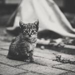 Kitty thumbnail