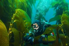 diver2Jul7-17 (divindk) Tags: anacapa anacapaisland californiaunderwater channelislands channelislandsnationalpark francescocameli gue globalunderwaterexplorers sanmiguelisland santabarbara santacruzisland santarosaisland scubadiving underwater ventura diver diverdoug drysuit kelp kelpforest marine ocean reef scubadiver sea underwaterphotography
