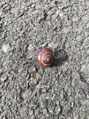 2017 (Day 198 - 17th Jul): Stranded small snail (shell?)