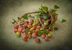 16 luglio 2017. Composizione con cestino e prugne selvatiche (adrianaaprati) Tags: composition stilllife basket creel prunes textured texture kerstinfrank wildplums