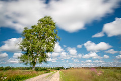 Birch tree in the wind (- Man from the North -) Tags: windy movement tree birch road gravelroad landandscape clouds sky forest summer nature nikon d500 tamron photography longexposure bigstopper filter finland westcoast ostrobothnia fields outdoors grass