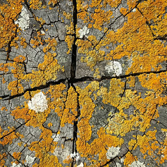 Week 29 Abstract nature (MaurM1) Tags: 2017photochallenge lichen groynes