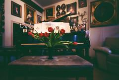 World Pinhole day - 30 April 2017 (.grux.) Tags: holga120wpc pinhole film mediumformat expiredfilm 120 fujireala100 6x9 piano red tulips portrait worldpinholeday toronto