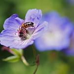 pollination thumbnail