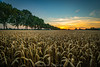 Sundown Niederrhein (fotos_by_toddi) Tags: fotosbytoddi voerde niederrhein nrw nordrhein westfalen sonne sundown sonnenuntergang feld allee sony alpha a7 alpha7 sonya7 sonyalpha7 sky sun weizenfeld weizen explored