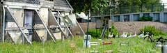 Fronik boerderij - Aart Jan van Mossel 2017 (7) (Stadsherstel) Tags: stadsherstel zaandam zaanstad fronik boerderij herbestemmen restaureren westerwindpad westzanerdijk amsterdam restauratie zaanstreek zaans krot natuur dieren