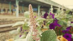 Fleurs de Perrache (freddylyon69) Tags: lyon gare flowers trainstation perrache sony xperiaxz flou colors plantes
