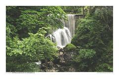 FOTOSERIE RAPPENLOCHSCHLUCHT #1 (PADDYSCHMITT.DE) Tags: rappenloch rappenlochschlucht klamm bergbach dornbirn voralberg gäntle wasser tobel wasserfälle wald natur outdoor waterfall river