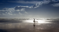 Dog Day Afternoon (Bruus UK) Tags: mawgan porth cornwall beach dogs walking sea ocean man person sky storms clouds sunlight reflection brightness seascape sand waves surf rollers