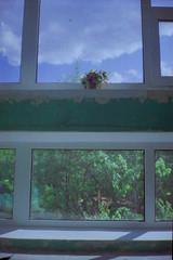 17ю1 (swan.mary) Tags: film эликон street home green 1stroll purple blue summer light window ukraine analog plant kiev