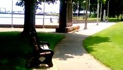 Lovely summer day - HBM (Maenette1) Tags: veteransmemorialpark bench monument grass sidewalk trees marina summer menominee uppermichigan happybenchmonday flicker365