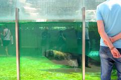 day 173 (Wolfgang Binder) Tags: 365days me self nikon d7000 zeiss distagon distagont2825 zoo reflection seal watching aquarium schoenbrunn zoovienna zooviennaschoenbrunn