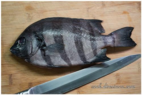 橫帶石鯛2吃02.jpg