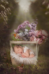 Diss-newborn-baby-girl-laying-outside-(composite)-in-a-basket-with-a-robin-sitting-on-the-handle-and-flowers (Liz Wood Photography) Tags: babyphotographer babyphotographeressex babyphotographerlondon babyphotographersuffolk babyphotography babyphotos buryphotographer cambridgebabyphotographer cambridgenewbornphotographer cambridgenewbornphotography cambridgephotographer chelmsfordphotographer colchesterbabyphotographer colchesterbabyphotography colchesterphotographer essexbabyphotographer essexnewbornphotographer essexphotographer familyphotographercambridge familyphotographeressex familyphotographerlondon familyphotographersuffolk halsteadphotographer lifestylephotographercambridg lifestylephotographeressex lifestylephotographerlondon lifestylephotographersuffolk londonbabyphotographer londonnewbornphotographer londonnewbornphotography londonphotographer manningtreephotographer newbornspecialistphotographer photographeripswich photographerburystedmunds photographerinessex photographerinlondon photographerinsuffolk sudburyphotographer suffolkbabyphotographer suffolknewbornphotographer suffolknewbornphotography suffolkphotographer weddingphotographer lifestylephotographercambridge