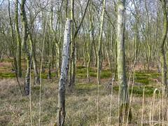 Naardermeer (Nelleke C) Tags: 2017 laagveen lake landscape landschap marsh meer moeras moerasbos naardermeer nederland netherlands peat plas