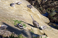 San Diego February 2008 05 (mainstreetmagic) Tags: california sandiego february 2008